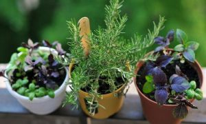 Фитолампа для домашнего выращивания растений – инструкция по использованию