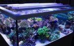 Особенности и правила выбора светильника для освещения морского аквариума