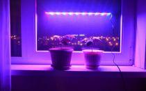 Что означает розовый или фиолетовый свет в окнах жилых домов