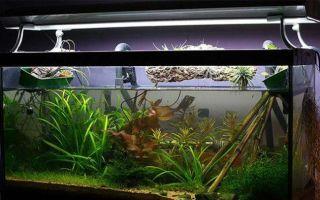 Особенности и правила ремонта аквариумных светильников
