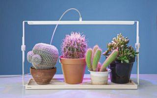 Правила использования люминесцентных ламп дневного света для подсветки растений