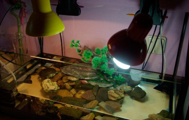 УФ лампа для черепах