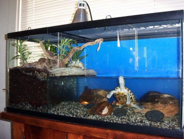 Черепашка в аквариуме