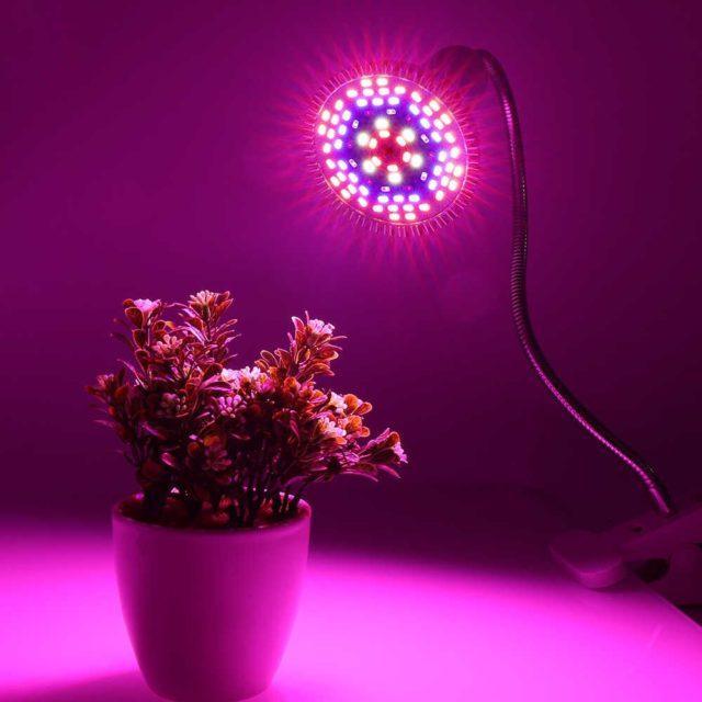 Цветок под лампой