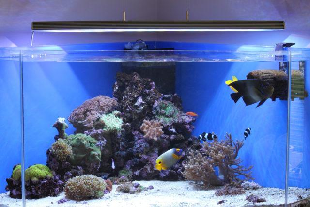 Освещение для аквариума