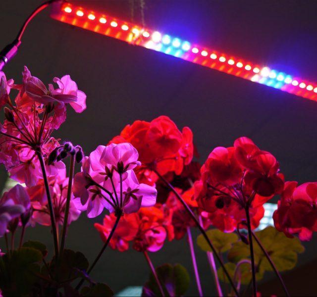 Лампа и растения