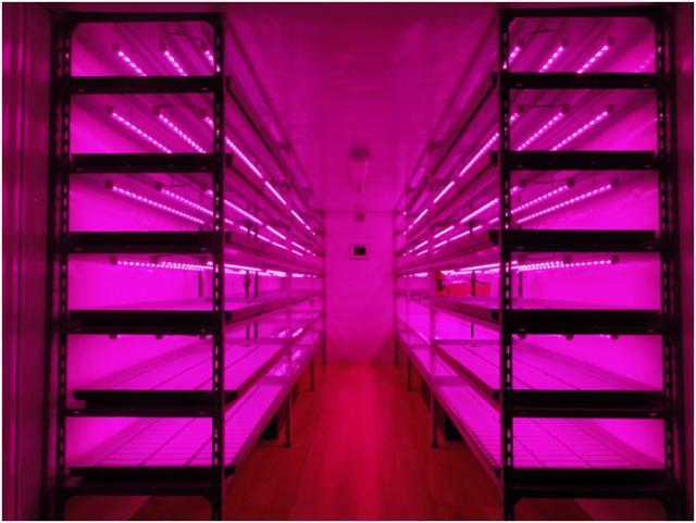 Стелаж для растений